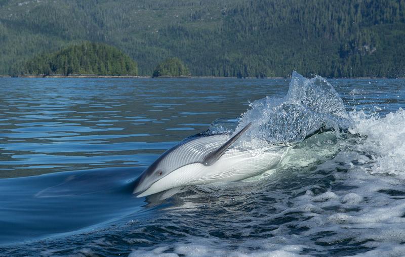 Shane Keena Photography | Dolphins